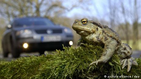 A toad sits on moss by the roadside (Photo: Patrick Pleul)
