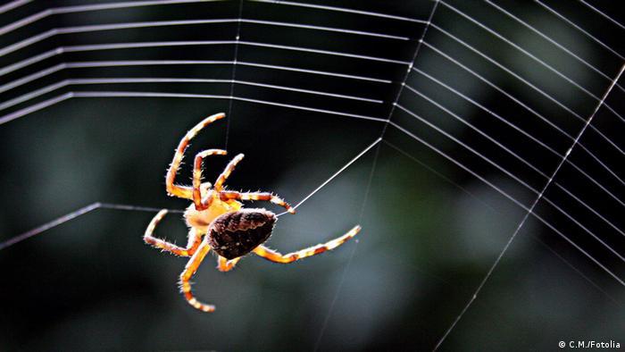 Spinne im Netz (Foto: fotalia)