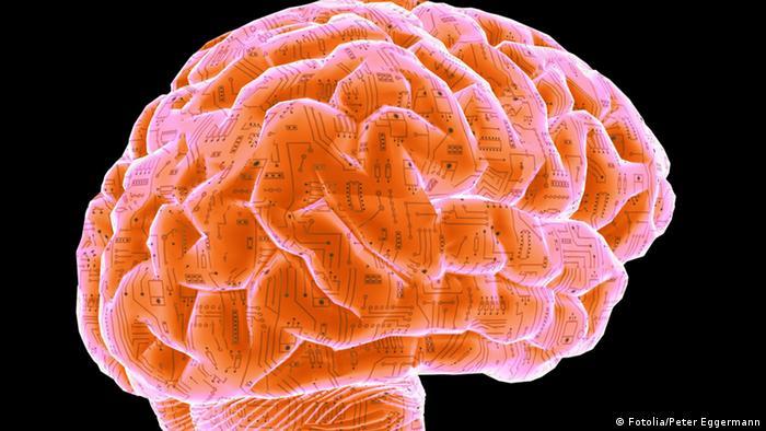 آن اندامی که افسار عشق را در دست دارد، مغز انسان است