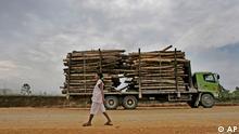 Baumstämme werden auf einem Truck transportiert / Indonesien