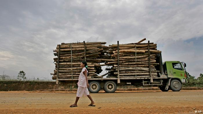 An Indonesian woman walks past a truck loaded with logs in Indonesia. (ddp images/AP Photo/Dita Alangkara)