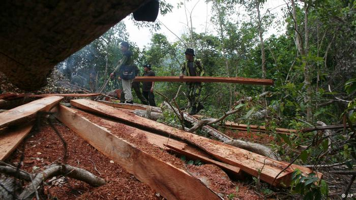 An illegal logging site in Indonesia (photo: (ddp images/AP Photo/Heri Juanda)