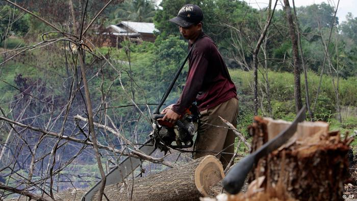 In this April 30, 2008 file photo, a worker uses a chainsaw to cut an acacia log while clearing an area near Bukit Tiga Puluh, Riau, Central Sumatra, Indonesia. Rich and poor governments are close to reaching a historic agreement which aims to eliminate deforestation by 2030 mostly in tropical nations as part of an global effort to slash destructive greenhouse gases, delegates said. (Photo: Achmad Ibrahim/AP)