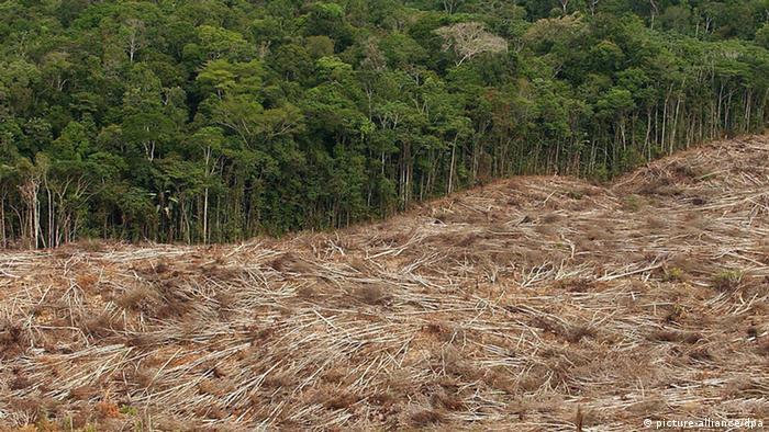 Symbolbild Abholzung der Regenwälder