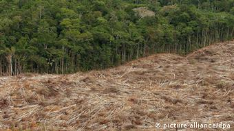 Fallen trees lay on the edge of a forest in the Amazon region (Photo: Marcelo Sayao)