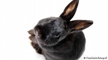 A black rabbit looking up