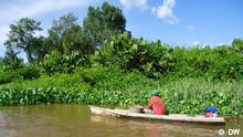 Amazonas Schutzgebiet Itatupã-Baquiá Pará