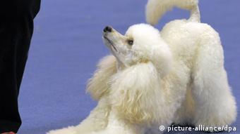 O Alemao E O Amor Pelos Animais Descubra Os Cliches E As