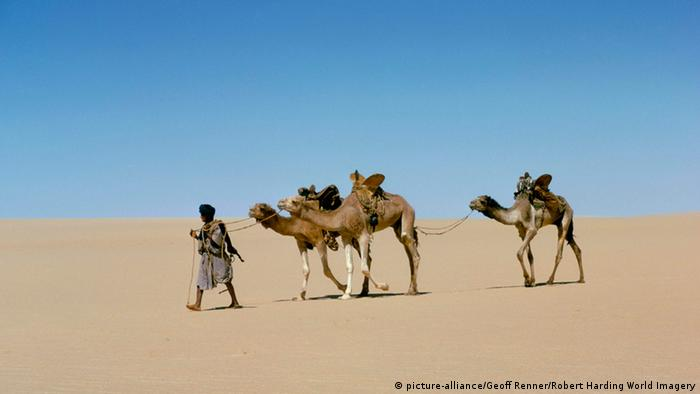 two camels in the desert, lead by one man