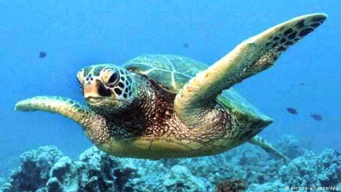 تنها کمتر از یک درصد دریاها و اقیانوسهای جهان تحت پوشش مناطق حفاظتشده قرار دارند