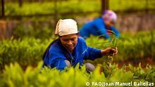 Symbolbild Grüne Ökonomie, FAO (Food and Agriculture Organization of the United Nations); © FAO/Joan Manuel Baliellas