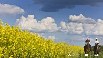 Produção de canola pode ser afetada com redução de subsídios a biocombustíveis