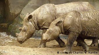 Sumatran Rhinoceroses at the Cincinnati Zoo. Photo: Charles W. Hardin