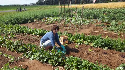 unkräuter bestimmen landwirtschaft