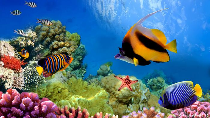 A coral reef and colorful fish
