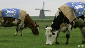 Protest gegen EU Verfassung, Referendum in Holland