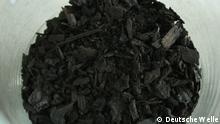 Potsdam, Malaysia, Biokohle, Biomasse, Nachhaltigkeit, Sandboden, Nährstoffe, Versorgung, Landwirtschaft, CO2-Einlagerung, Versuchsfeld, Maispflanzen, MS Wissenschaft, Deutschlandreise