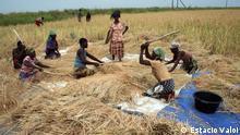 Traditionelle Landwirtschaft