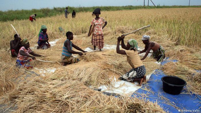 Sociedade civil moçambicana critica programa agrícola
