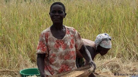 Agricultores na província da Zambézia durante a colheita de arroz