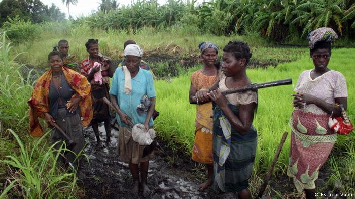 Agricultores de Chinde numa plantação de arroz, província da Zambézia