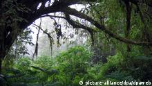 DW eco@africa - A rain forest in Cameroon (picture-alliance/dpa/dpaweb)