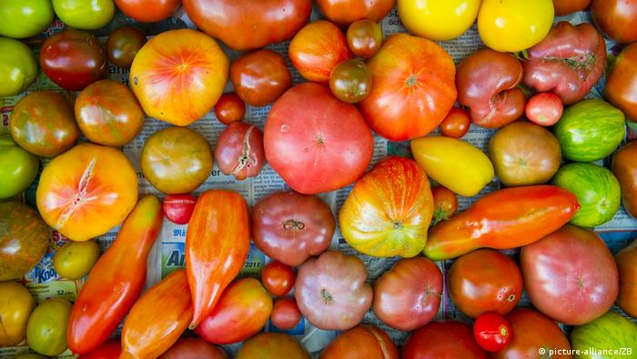 Various varieties of tomatoes side by side