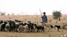 Niger Normaden Fulani Scharfherde bei Gadabeji