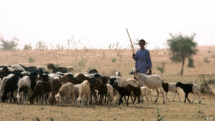 In this Tuesday, May 11, 2010 photo, a nomadic Fulani herder grazes his sheep on parched land around Gadabeji, Niger. At this time of year, the Gadabeji Reserve should be a refuge for the nomadic tribes who travel across the moonscape deserts of Niger to graze their cattle. But the grass is meager, not enough even for the small goats, after a drought killed off the last year's crops. International aid groups once again warn this nation of 15 million on the verge of the Sahara Desert faces a growing food crisis.(ddp images/AP Photo/Sunday Alamba)