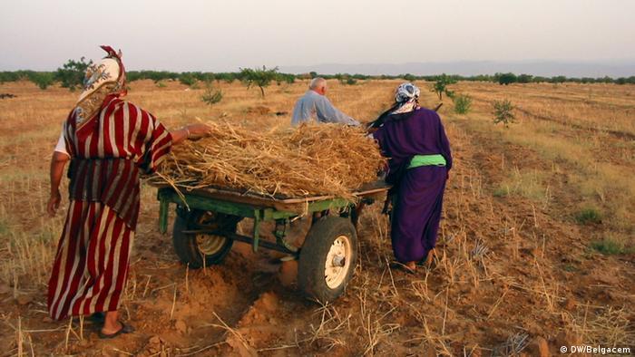 Algerien Frauen in Sidi Bouzid