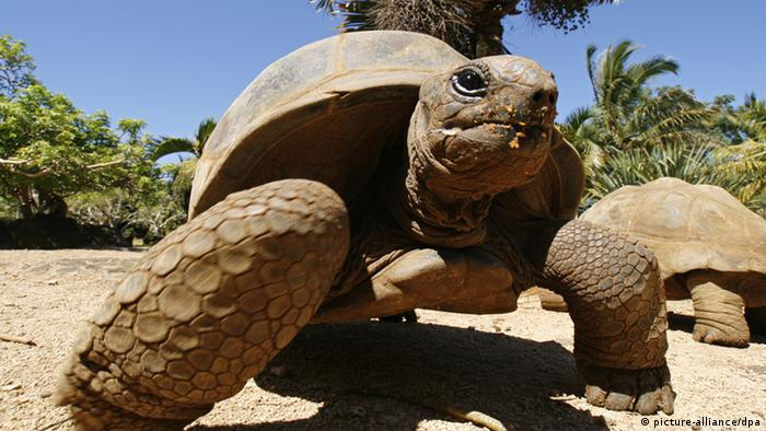 Giant tortoise (Photo: Lars Halbauer dpa - Report)
