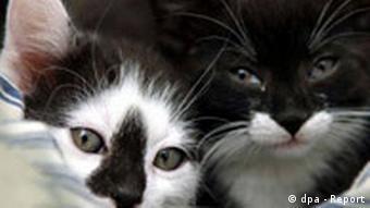 Erste Babystation für streunende Katzen eröffnet