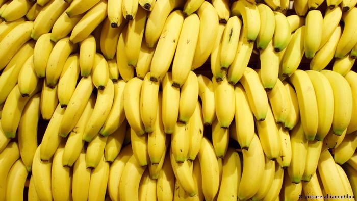 Cavendish, la variedad de banano más popular del mundo.