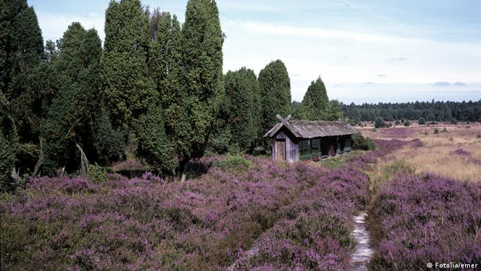 The Lüneburg Heath is a spectacle of wildflowers and color, which attracts thousands every year. Located between Hamburg, Hannover and Bremen, the heath is one of Europe's most impressive natural environments.
