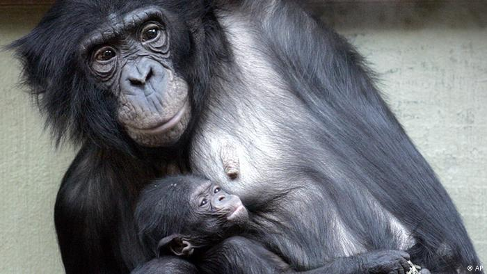 10 facts you probably didn′t know about great apes | Science