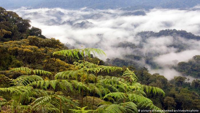 Nyungwe national park in Rwanda