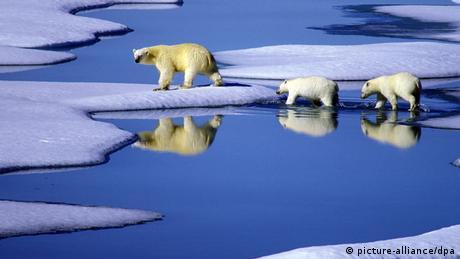 ذوبان الجليد بسبب التغيرات المناخية يؤثر على بئية ونمط حياة الدببة في جزيرة غرينلاند (صورة رمزية)