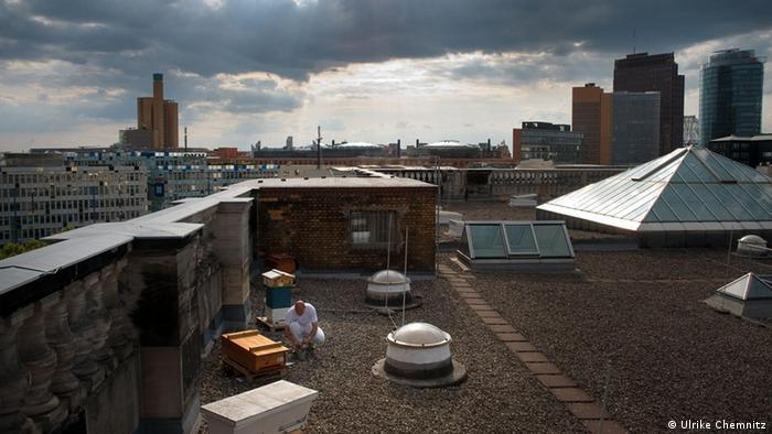 Пчеловод занимается сбором меда на крыше ландтага в Берлине