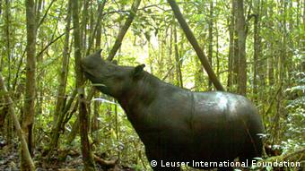 Sumatran and Javan rhinos have been categorized as critically endangered