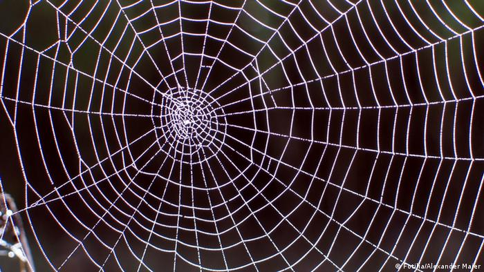 Spider web (Photo: Alexander Maier/Fotolia)