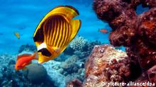 Unterwasser Ozean