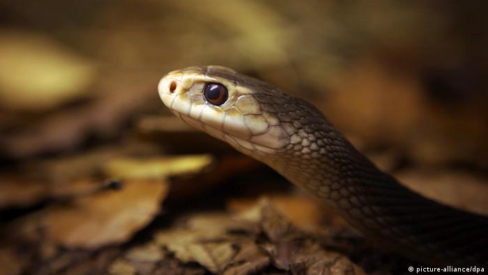 Жахливий укус змії