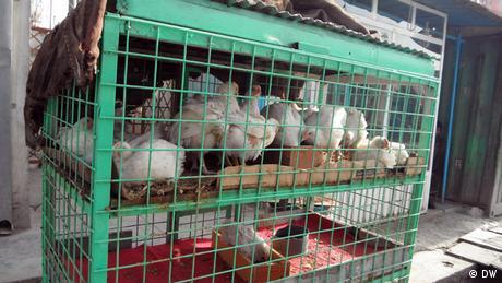 Hühnchen Markt à Kaboul (DW)