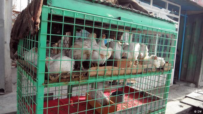 Hühnchen Markt in Kabul (DW)