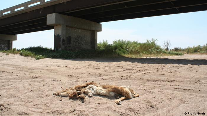 Titel/Title: Dead River Who is the photographer: Frank Morris July 17, 2012
