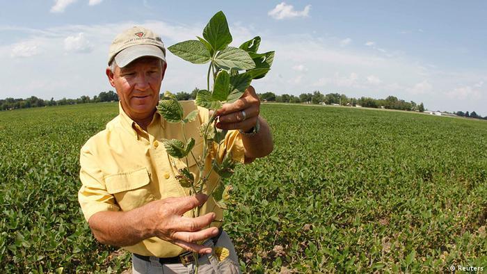 USA Kentucky Dürre Feld mit Sojabohnen (Reuters)