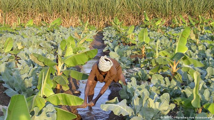 Sustainable agroecosystem with cabbage and bananas; Copyright: IWMI/Comprehensive Assessment