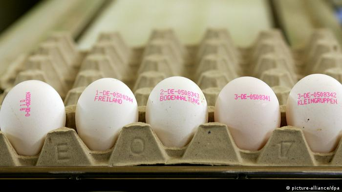 Eggs in a carton with different codes Photo: Roland Weihrauch dpa