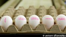 У Німеччині виробники зобов´язані маркувати яйця, відповідно до умов утримання курей