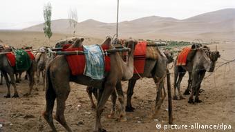 Eine Karawane in der Wüste Takla Makan in China an der historischen Seidenstraße. Die aus einem Netz von Karawanenstraßen bestehenden Seidenstraßen führten ungefähr seit dem zweiten Jahrhundert v. Chr. von China durch Zentralasien hin zum Mittelmeeer und zum Schwarzen Meer. Undatierte Aufnahme. +++(c) dpa - Report+++